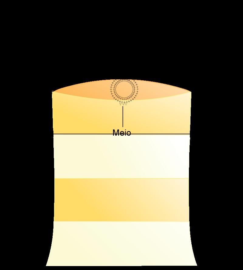 graf-blusa-3